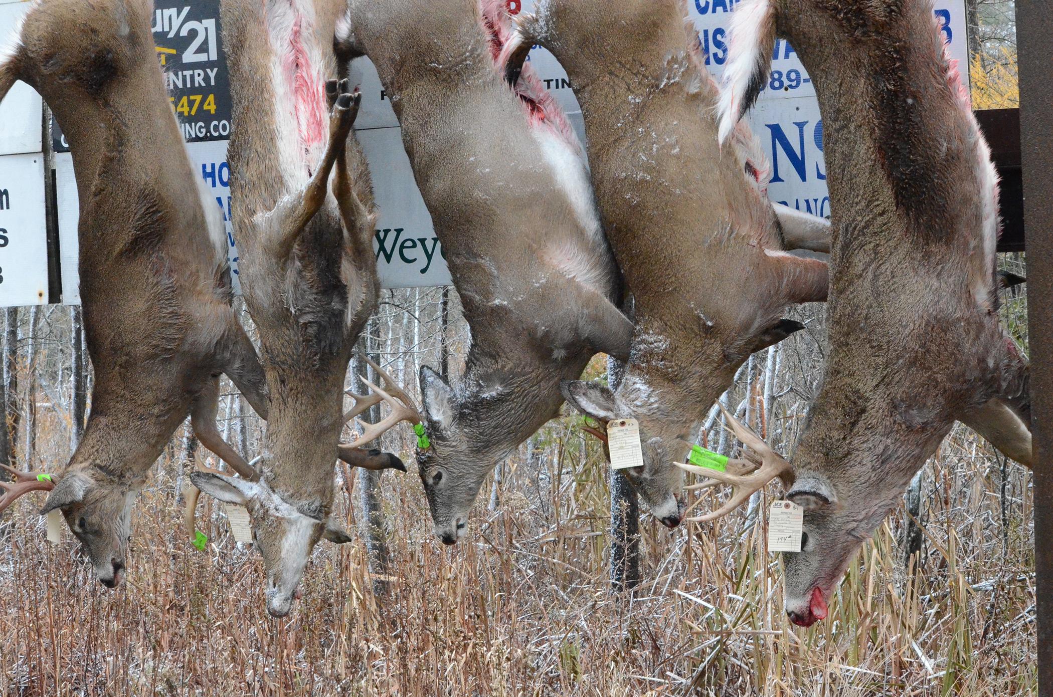 Buck Pole Day 2